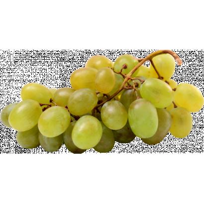 Fehér szőlő